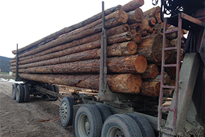 Eastern Washington Firewood