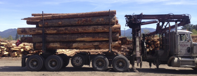 Seasoned Short Logs