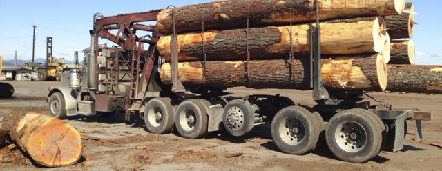 Short Large Diameter Logs